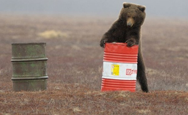 Russian_bears_getting_high_2